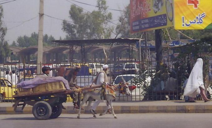 Little boy driving little donkey.