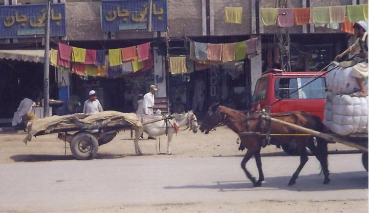 Skinny horse, midget donkey, on one of Peshawar's streets.