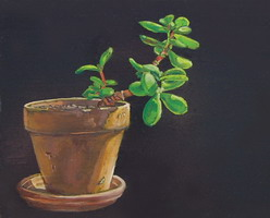 Succulent- Oils on panel 8 x 10 inches
