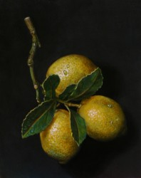 Lemons. Oils on panel 25 x 20 cm (10 x 8 in)