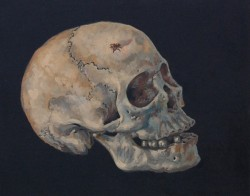 Human skull with fly. Oil paints on panel  30 x 45 cm