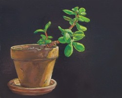 Succulent in clay pot. Oil painting on panel 30 x 45 cm