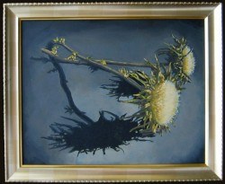 Dry thistle, oil paints on panel 30 x 45 cm